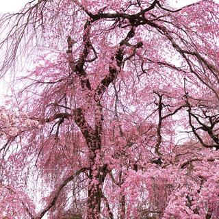春 - No.418181