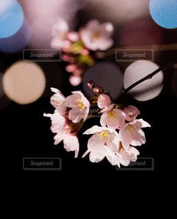 春 - No.423160