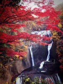 滝の写真・画像素材[3721713]