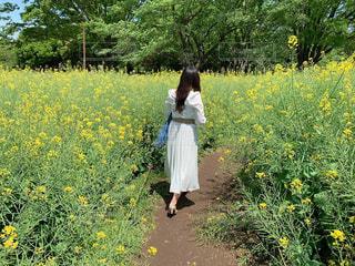 ワンピース,後ろ姿,菜の花,少女