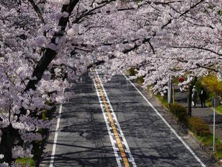 花のある暮らしの写真・画像素材[2149651]