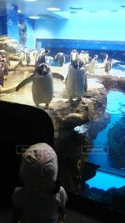 ペンギンと子供の写真・画像素材[2136889]