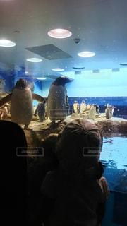ペンギンと子供の写真・画像素材[2136893]