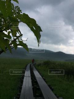 雨,水,水滴,雷,梅雨,ハイキング,しずく,尾瀬,木道,山ガール