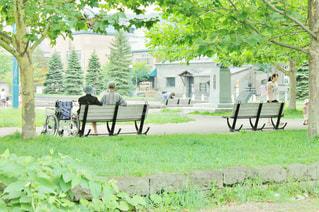 公園,新緑,うしろ姿,車椅子,老夫婦,寄り添う