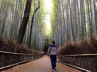 京都,後ろ姿,人物,背中,竹,後姿,竹林