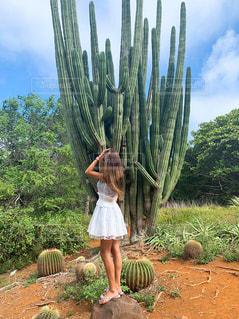 自然,緑,後ろ姿,女の子,人物,背中,人,後姿,サボテン,ハワイ,植物園