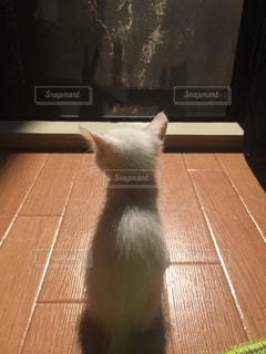 動物,後ろ姿,子猫,白猫