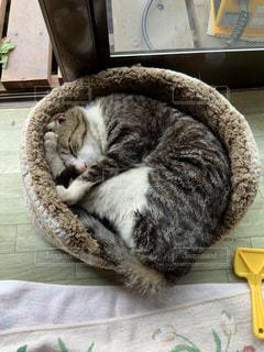 地面に横たわる猫の写真・画像素材[2283861]
