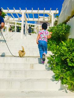 犬,動物,後ろ姿,散歩,女の子,7歳