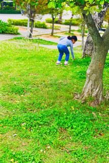 公園,芝生,後ろ姿,散歩,女の子,花摘み,7歳
