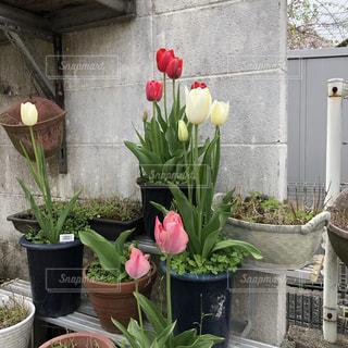 植木鉢のクローズアップの写真・画像素材[2141097]