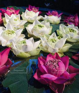 花のクローズアップの写真・画像素材[2141204]