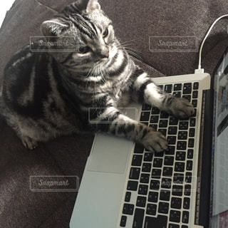 ラップトップの上に座っている猫の写真・画像素材[3289465]