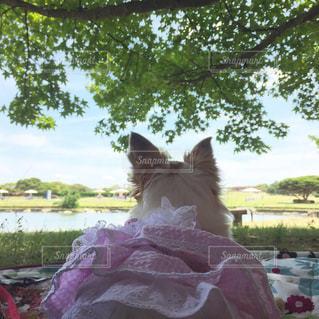 公園,動物,屋外,後ろ姿,樹木,ピクニック,後姿,木陰,まったり,ひと休み