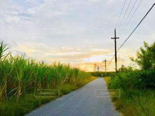朝焼け,朝,波照間島,お散歩,サトウキビ畑