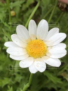 花のお皿の写真・画像素材[2171082]