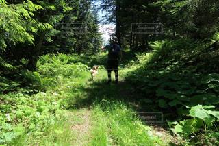 緑豊かな森を歩く人と犬の写真・画像素材[2218761]
