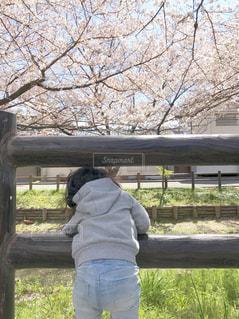 子ども,花,春,桜,後ろ姿,こども,後ろ姿フォト
