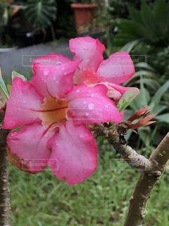 自然,花,屋外,ピンク,しずく