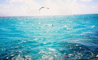 海の光の写真・画像素材[2344069]