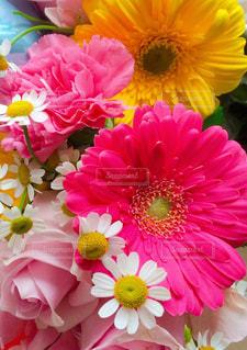 花のクローズアップの写真・画像素材[2357370]