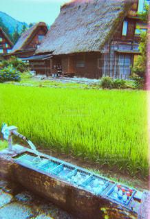 夏,レトロ,稲,白川郷,ナチュラル,フィルム,雰囲気,自然光,フィルム写真,フィルムフォト