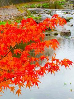 秋の色彩の写真・画像素材[2620292]
