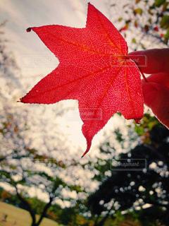 秋の色彩の写真・画像素材[2635148]