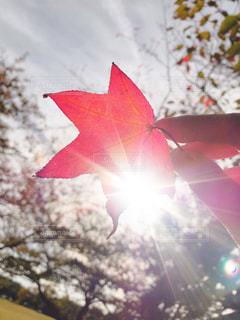 秋の光の中での写真・画像素材[2636402]