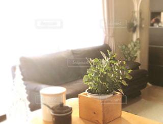 暮らしを豊かにする観葉植物の写真・画像素材[2739505]