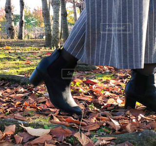 足元から秋の写真・画像素材[2748091]