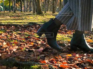 足元から秋の写真・画像素材[2748092]