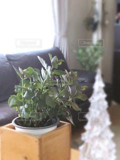 観葉植物のある暮らしの写真・画像素材[2778945]