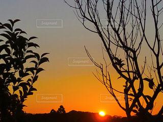 夕日が背景にある木の写真・画像素材[2890706]