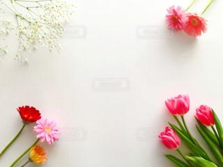 花フレームの写真・画像素材[2982597]