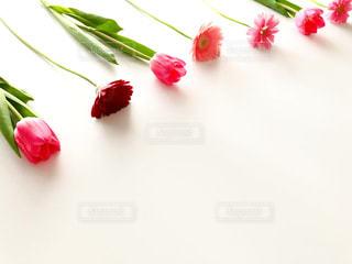 ピンク花の写真・画像素材[2985780]