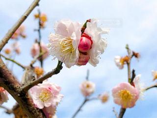 春の訪れをの写真・画像素材[3018838]
