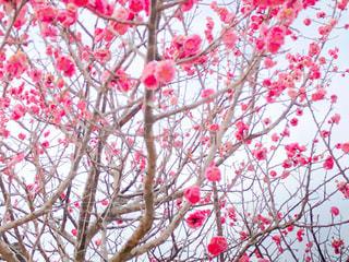 春の訪れをの写真・画像素材[3018926]
