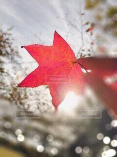 秋,葉,手持ち,楓,人物,キラキラ,ポートレート,玉ボケ,赤色,ライフスタイル,手元