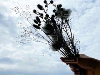 空,花,手持ち,人物,ポートレート,ライフスタイル,手元,綿