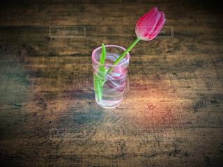 ピンクのチューリップの写真・画像素材[4311999]