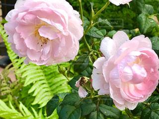 花の写真・画像素材[2147826]