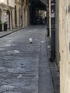 建物,屋外,背中,白猫,石畳,道,しっぽ,裏通り,シチリア