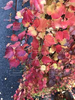 壁にも秋の写真・画像素材[2644473]