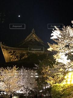 夜桜ライトアップの写真・画像素材[2644740]