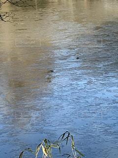 水面の小鳥の写真・画像素材[2914634]