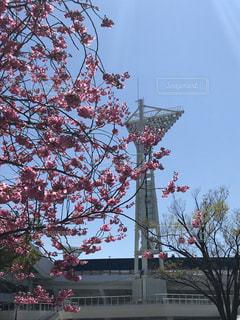 空,花,春,桜,木,屋外,花見,樹木,お花見,草木