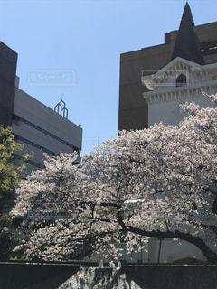 空,建物,花,春,桜,屋外,樹木,教会,石