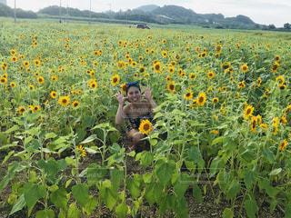 野原の黄色い花の写真・画像素材[2278496]